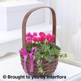 Happy Birthday Pink Cyclamen Basket with 125g Maison Fougere Chocolates